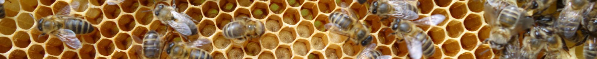 Syndicat des apiculteurs de Metz & environs